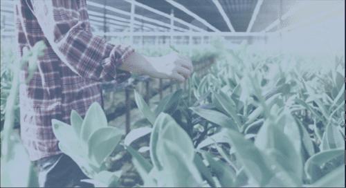 Proxima Food Manufacturing Report