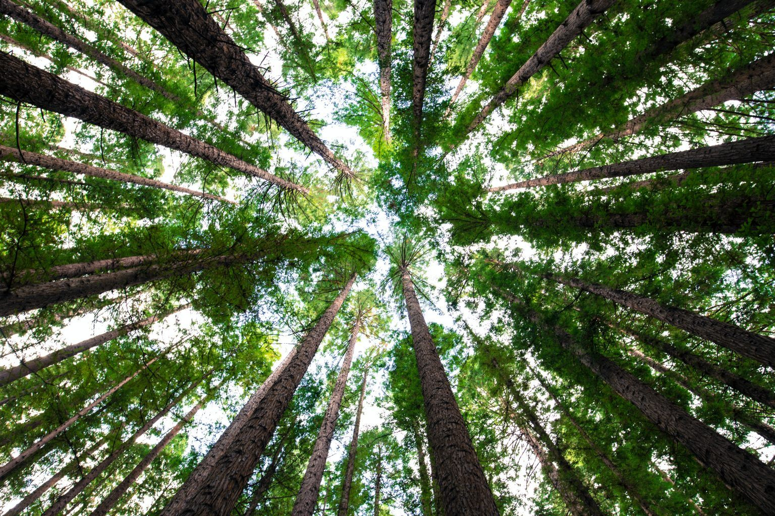 Creating a sustainable procurement strategy